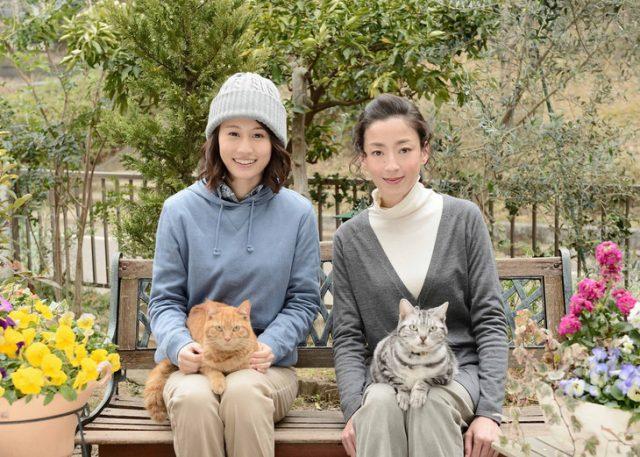 前田敦子出演「連続ドラマW グーグーだって猫である2」Blu-ray&DVD 11/2発売!