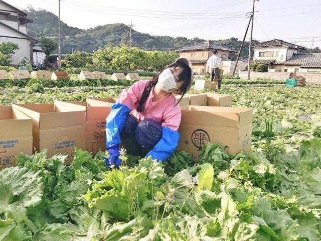 AKB48馬嘉伶「畑でMarry Me!」群馬県のレタス農家に泊まり込み! #4 [6/30 15:25~]