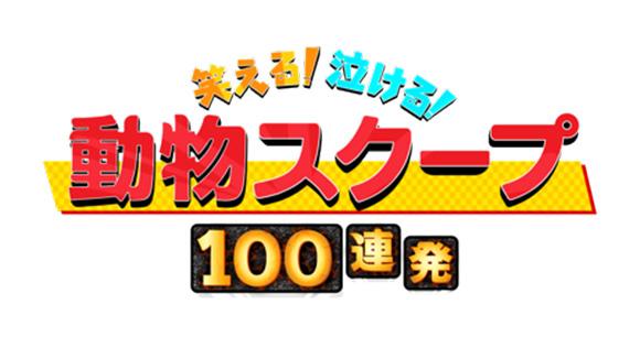 前田敦子が「笑える!泣ける!動物スクープ100連発」にゲスト出演!