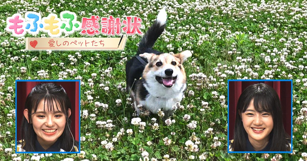 STU48 瀧野由美子&峯吉愛梨沙が「もふもふ感謝状〜愛しのペットたち〜」に出演!愛犬秘蔵VTRも!