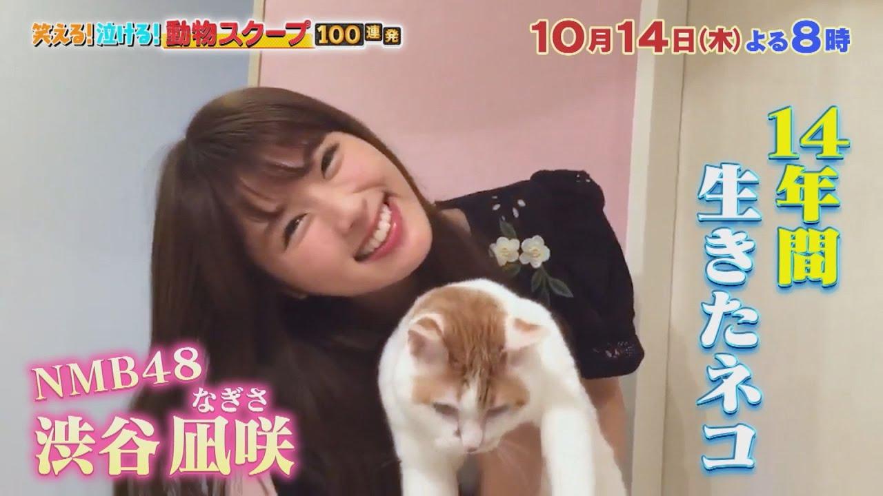 NMB48 渋谷凪咲が「笑える!泣ける!動物スクープ100連発」にゲスト出演!愛猫との絆にスタジオ涙…【2021.10.14 19:00〜 TBS】